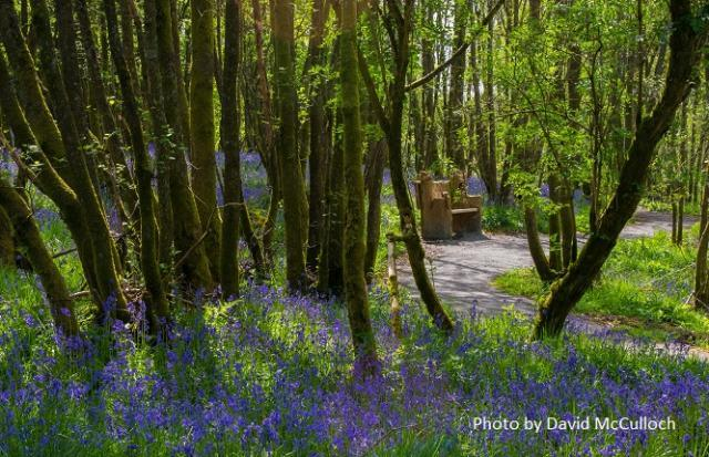 A quiet place to sit and admire the bluebells. The benches at RSPB Loch Lomond have been carved using a chainsaw.