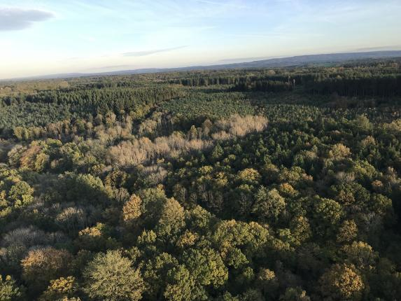 Alice Holt Forest from the air