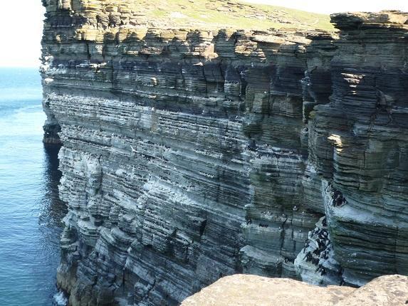 Seabirds at Noup Cliffs