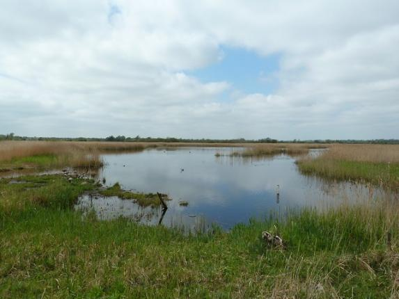 View from Reception Hide
